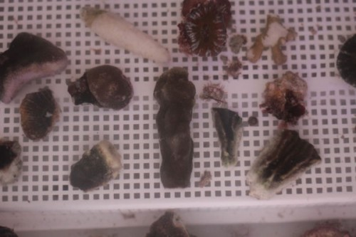 Specimens under white light